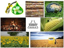 Состав биомассы
